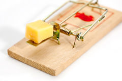 Mouse trap. Macro picture, mouse trap with bit of cheese stock photo