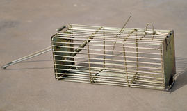 Mouse trap Stock Images