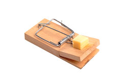 Mouse Trap. Photograph of a mousetrap and cheese shot in studio and isolated on white Royalty Free Stock Image