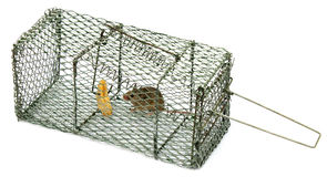 Mouse trap. With a mouse over white background Royalty Free Stock Photography