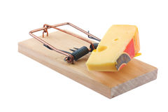 Mouse trap and cheese Stock Image