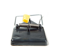 A mouse trap with cheese Royalty Free Stock Image