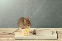 Mouse trap with cheese and mouse on background Stock Photo