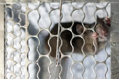 A mouse in a cage Stock Photos