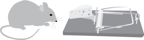 Mouse traps before Stock Image