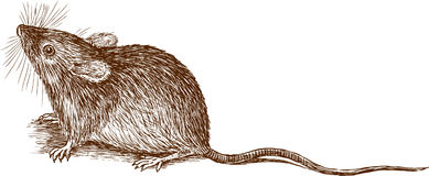 Mouse. Vector image of a little cute mouse vector illustration