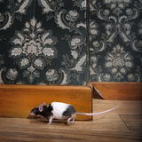 Mouse walking in a luxury old-fashioned roon Stock Images