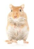 Mouse on white Royalty Free Stock Photos