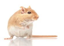 The mouse Stock Images