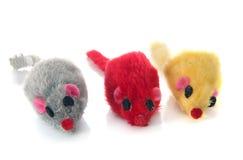 3 mouses для кота Стоковые Фотографии RF