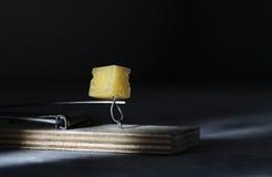 Mousestrap with cheese closeup Stock Photos