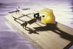 mousetrap сыра Стоковое Изображение