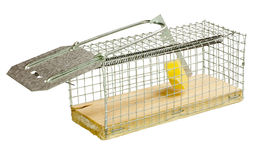 Mousetrap. Royalty Free Stock Photo