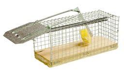 Mousetrap. Royaltyfri Foto