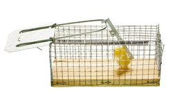 Mousetrap. Stock Images