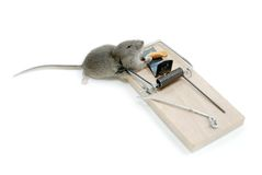 Mousetrap Royalty Free Stock Photos