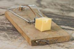 2 mousetrap Obrazy Stock