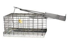 mousetrap Stock Foto