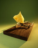 Mousetrap. With attractive cheese on green background Royalty Free Stock Image