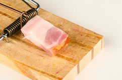 Mousetrap with bacon Stock Photography