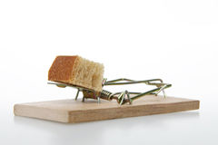 Mousetrap with bait. Stock Photo
