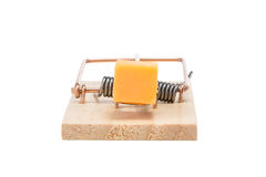Mousetrap with Cheddar Cheese - Isolated Stock Image