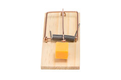 Mousetrap with Cheddar Cheese - Isolated Royalty Free Stock Photo