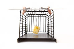 Mousetrap With Cheese Royalty Free Stock Images