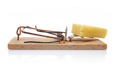 Mousetrap com queijo Foto de Stock Royalty Free