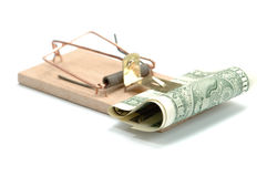Mousetrap con un dollaro Fotografie Stock