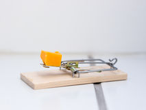 Mousetrap on floor Royalty Free Stock Image