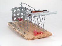 Mousetrap live traps,. Mousetrap live traps with meat Stock Images
