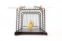 Mousetrap med ost Royaltyfria Bilder