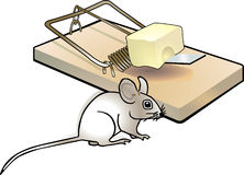 Mousetrap and mouse Stock Images