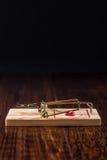 Mousetrap na twarde drzewo podłoga Zdjęcie Royalty Free