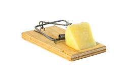 Mousetrap with a piece of cheese Royalty Free Stock Photography