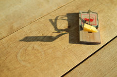 Mousetrap with piece of cheese waiting on sunny royalty free stock photos