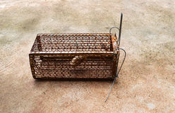 Mousetrap. Rat cage whit bait Stock Photography