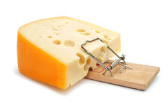 Mousetrap with a too large piece of cheese Stock Image