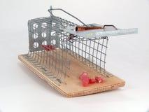 mousetrap żywi oklepowie Obrazy Stock