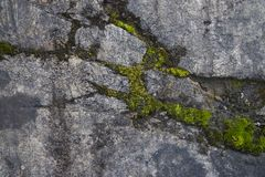 Mousse épaisse s'élevant sur une roche photographie stock libre de droits