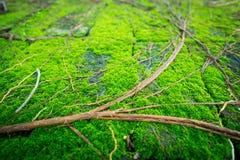 Mousse au sol Photo libre de droits