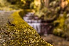 Mousse avec de l'eau un fond et verts troubles photographie stock libre de droits