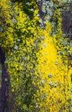 Mousse colorée sur l'arbre Image libre de droits