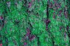 Mousse colorée sur le tronc d'arbre Photo dépeignant une macro vue de image libre de droits