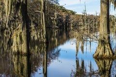 Mousse d'arbre de marais Images libres de droits