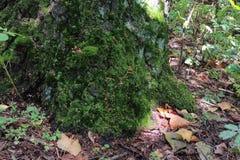 Mousse dans la forêt photo libre de droits