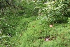 Mousse dans la forêt Photos libres de droits