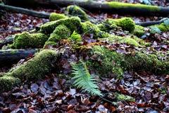 Mousse dans les bois Photographie stock