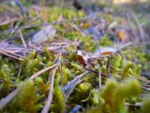 Mousse dans une forêt Images libres de droits